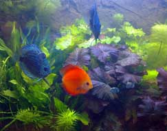 Aquarium Richtig Einrichten : aquarium richtig einrichten ~ Frokenaadalensverden.com Haus und Dekorationen
